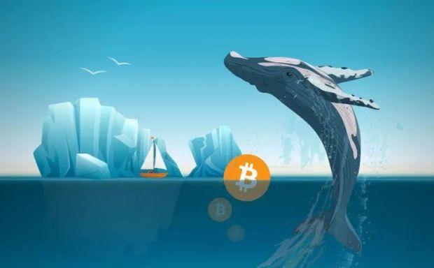 """今日推荐 据传比特币""""鲸鱼""""可以控制市场,那么谁来掌管""""鲸鱼""""呢?"""