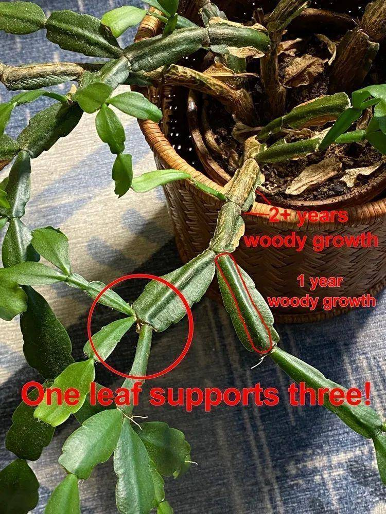 从生物学角度解读以太坊的价值:信任之树与德菲之叶插图4