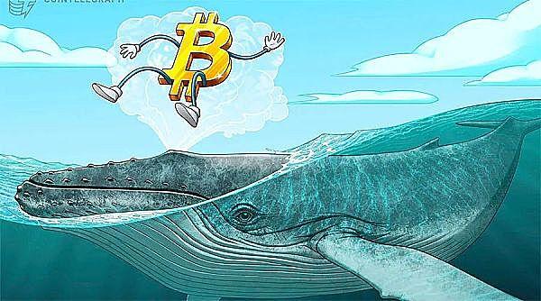 """""""百万富翁""""鲸鱼在过去25天里赢得了9万枚比特币"""