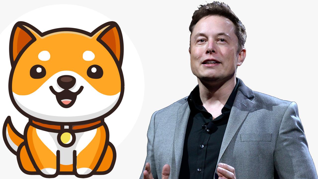 马斯克的动物币新宠Baby Doge了解一下